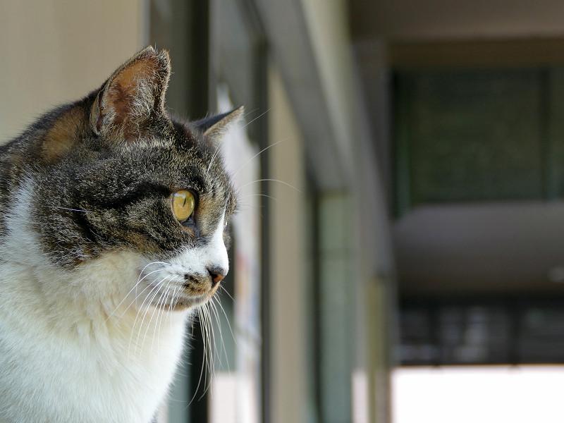デコが出ているキジ白猫2