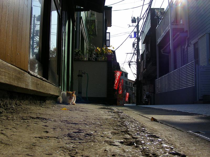 路地に佇んでる茶白の猫1