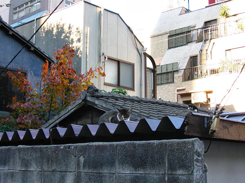 屋根の上に猫2匹1