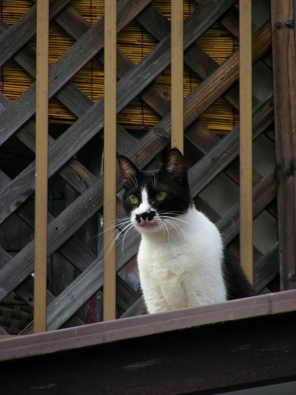 屋根の上にいた黒白猫2