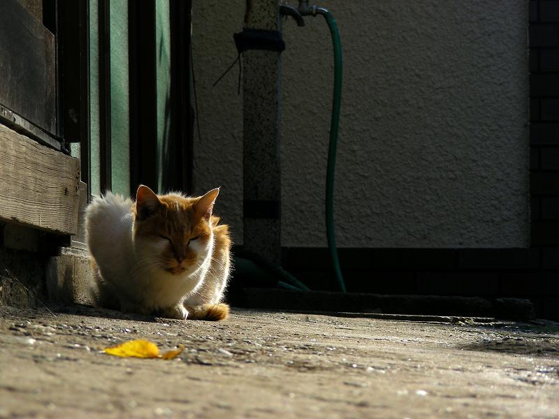 路地に佇んでる茶白の猫2