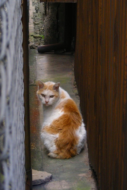 隙間に入って行く白茶猫2