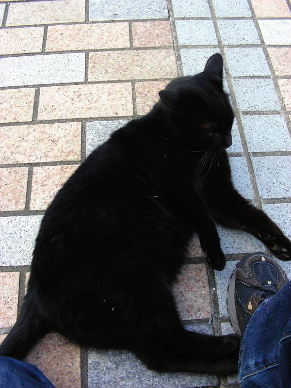 タイルと黒猫2