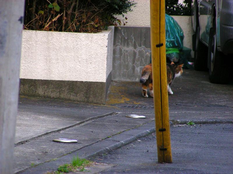 路地で転がってる三毛猫2