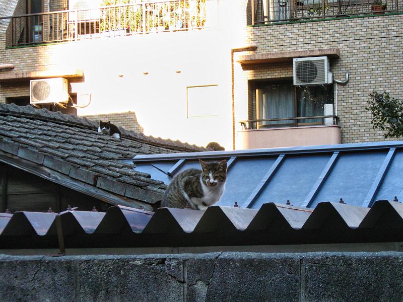 屋根の上に猫2匹2