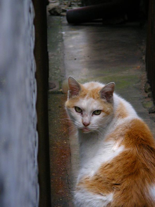 隙間に入って行く白茶猫3