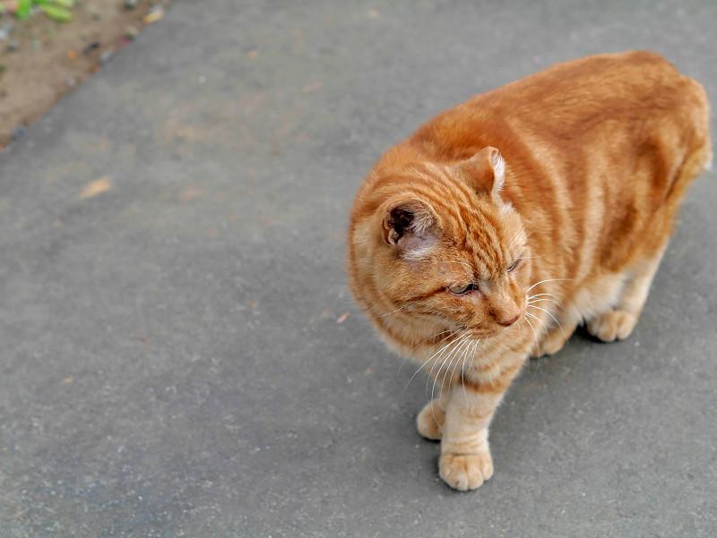 近寄って来た洋風柄の猫1