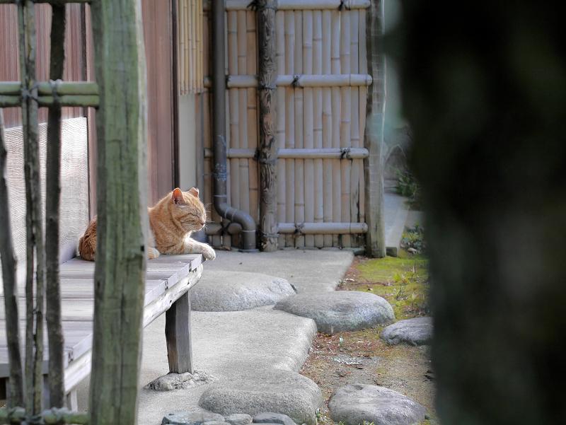 縁側とアメショー風の猫