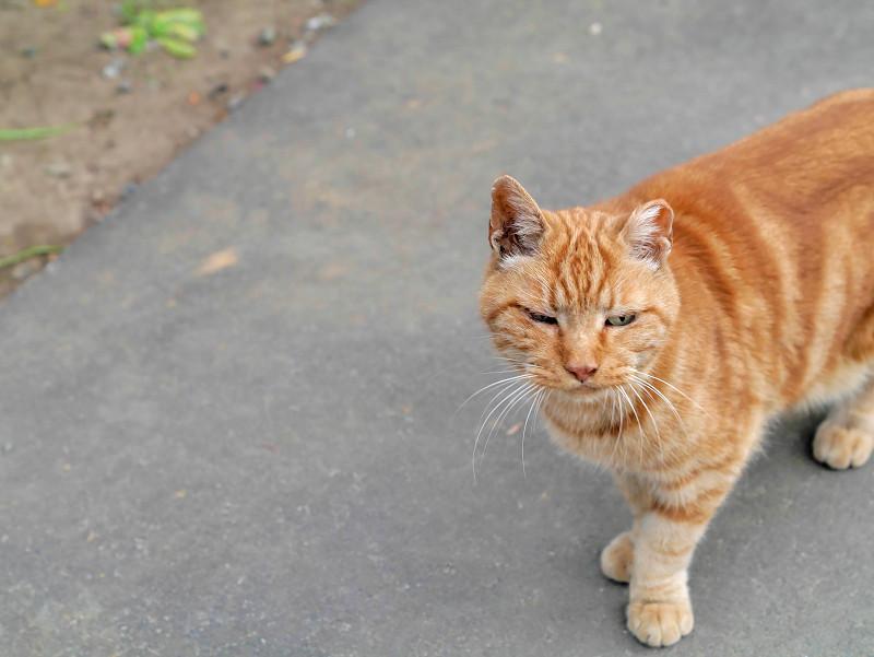 近寄って来た洋風柄の猫2