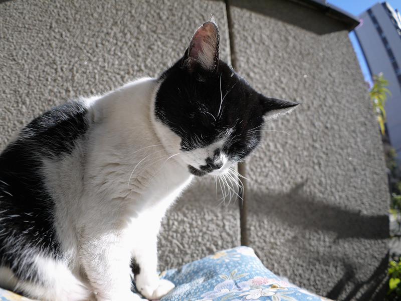 眠気に対抗してる白黒猫1