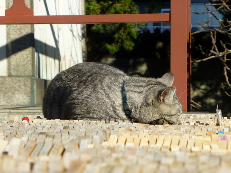 卒塔婆の上で寝ているサバトラ猫2