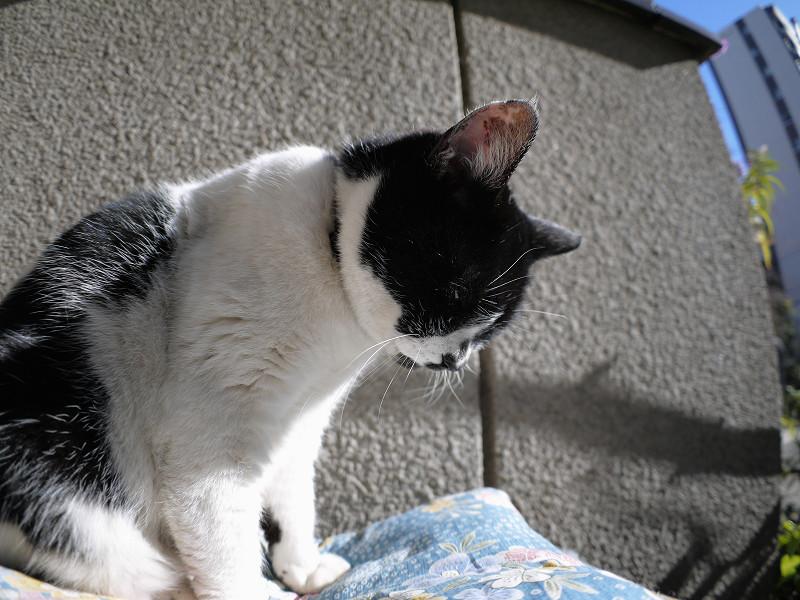眠気に対抗してる白黒猫2
