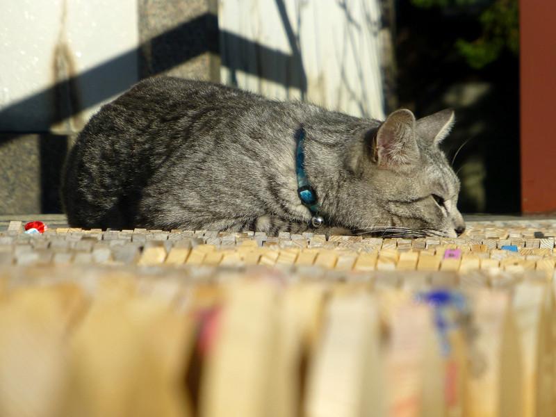 卒塔婆の上で寝ているサバトラ猫3