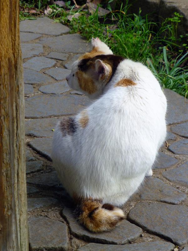 カキカキする猫の後ろ姿1