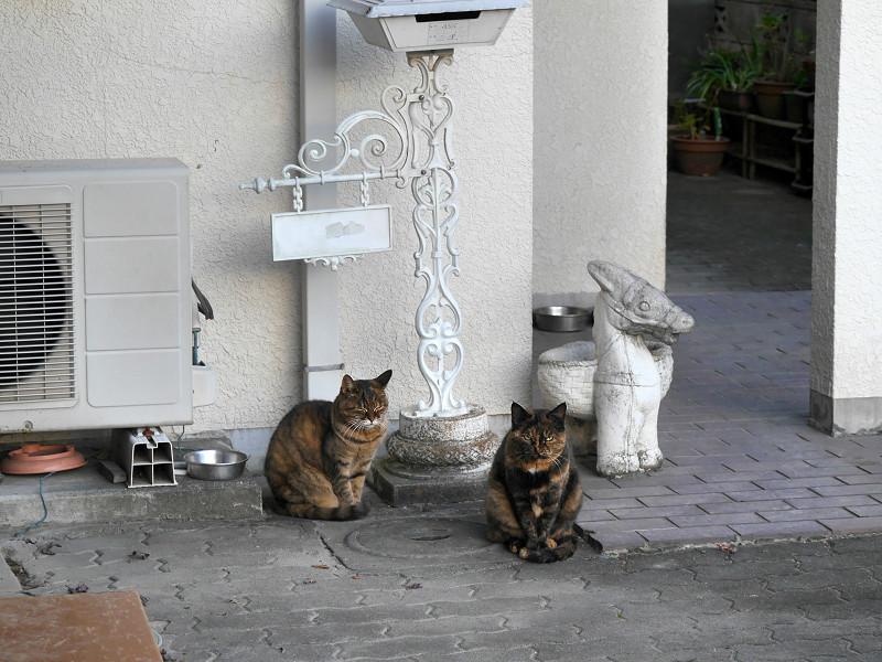 白い壁の前のサビ柄の猫1