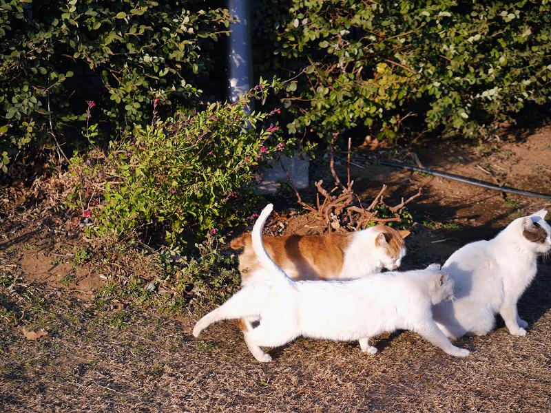 草の上で集合する猫たち1