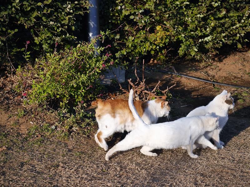 草の上で集合する猫たち2