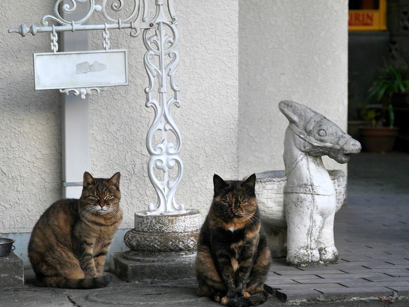白い壁の前のサビ柄の猫3