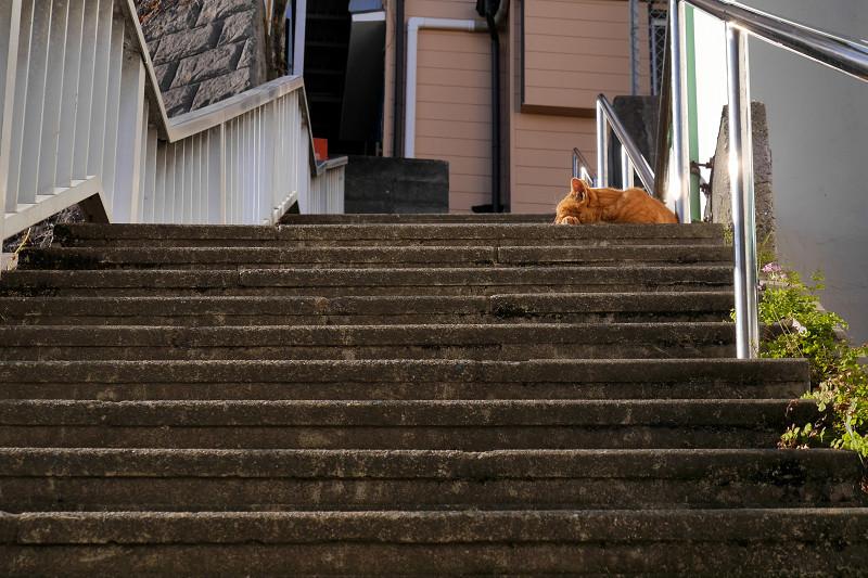 階段の踊り場で寝ている茶トラ猫1