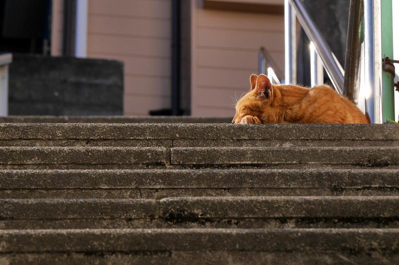 階段の踊り場で寝ている茶トラ猫2