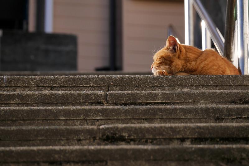階段の踊り場で寝ている茶トラ猫3