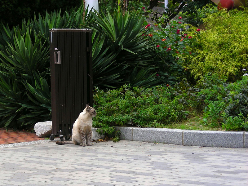 門扉と洋風猫1