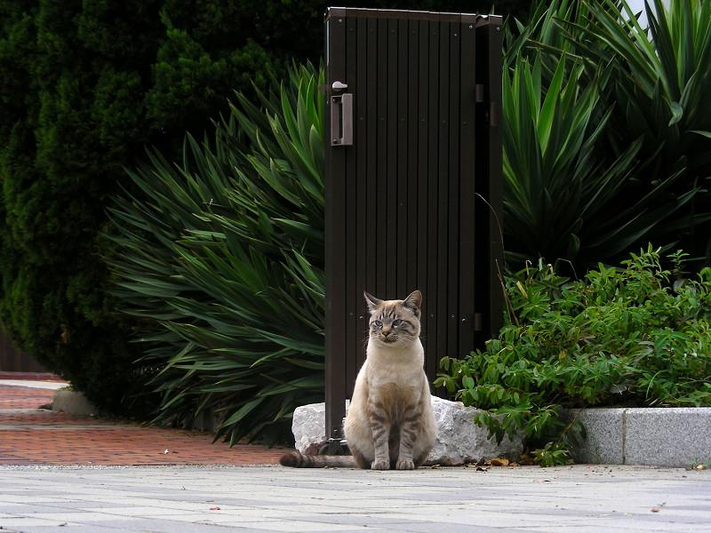 門扉と洋風猫2