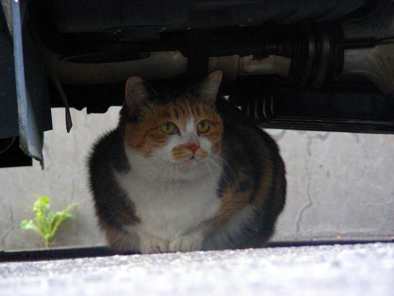 自動車の下の猫2