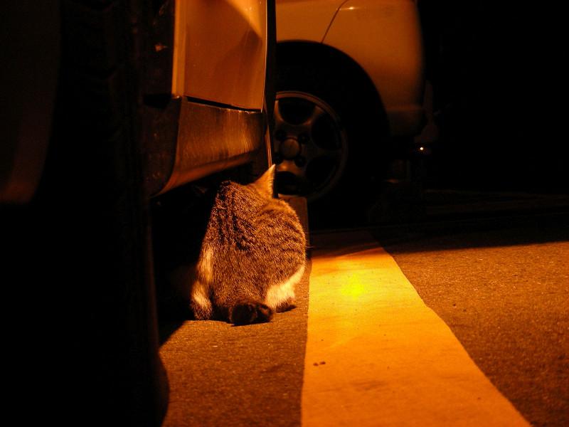 ボンネットに乗ってるキジ白猫3