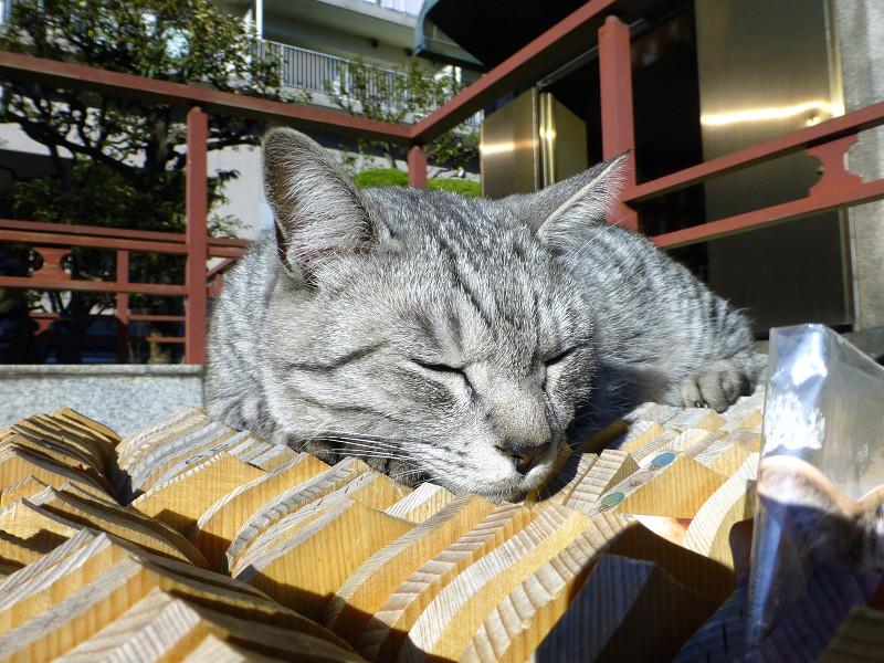 卒塔婆の上で不愉快顔のサバトラ猫1