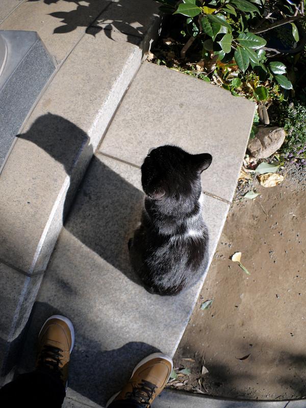光が反射する黒白猫1