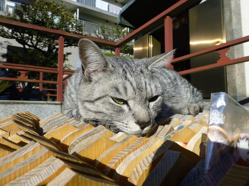 卒塔婆の上で不愉快顔のサバトラ猫2