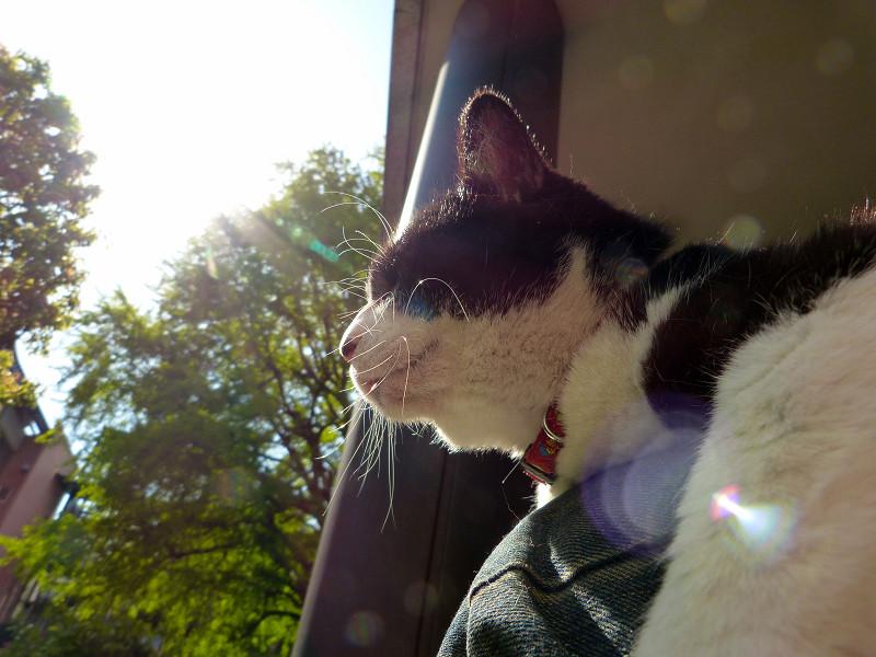 背中に日を受けている黒白猫3