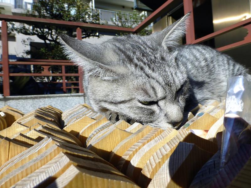 卒塔婆の上で不愉快顔のサバトラ猫3