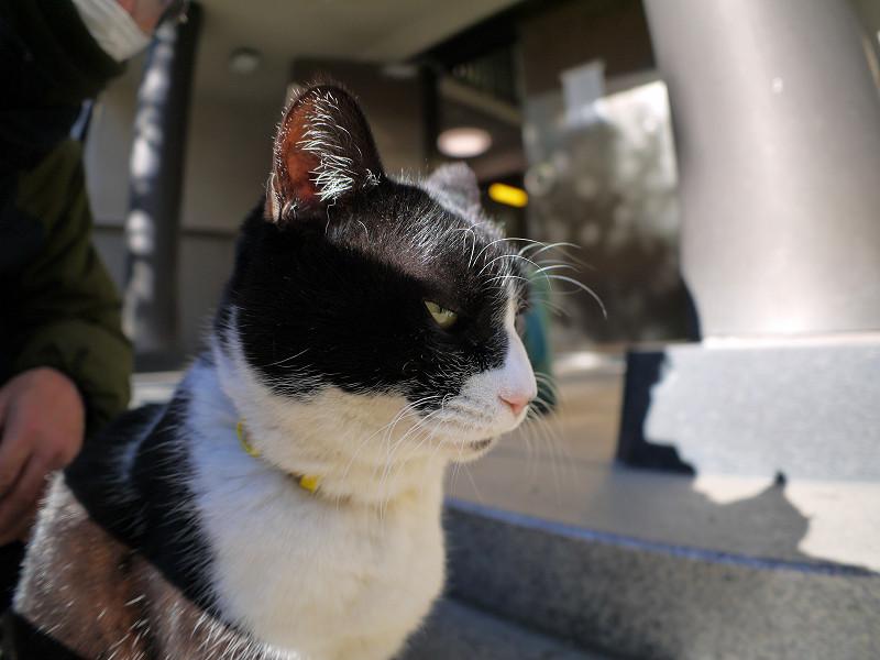 光が反射する黒白猫4