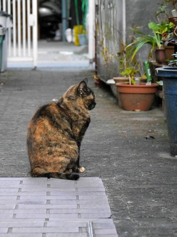 真ん丸猫背のサビ柄猫1