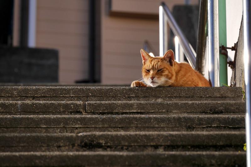 階段の踊り場で目を覚ました茶トラ猫1