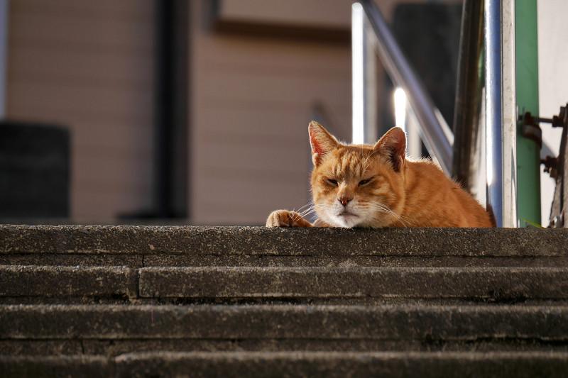 階段の踊り場で目を覚ました茶トラ猫2