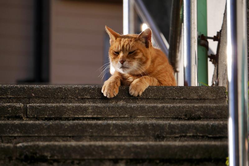 階段の踊り場で目を覚ました茶トラ猫3