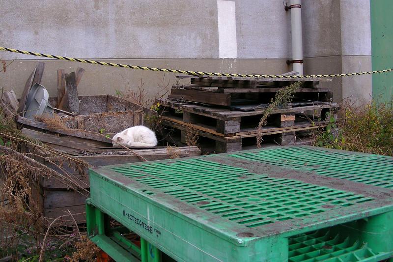 緑のパレットと白猫1