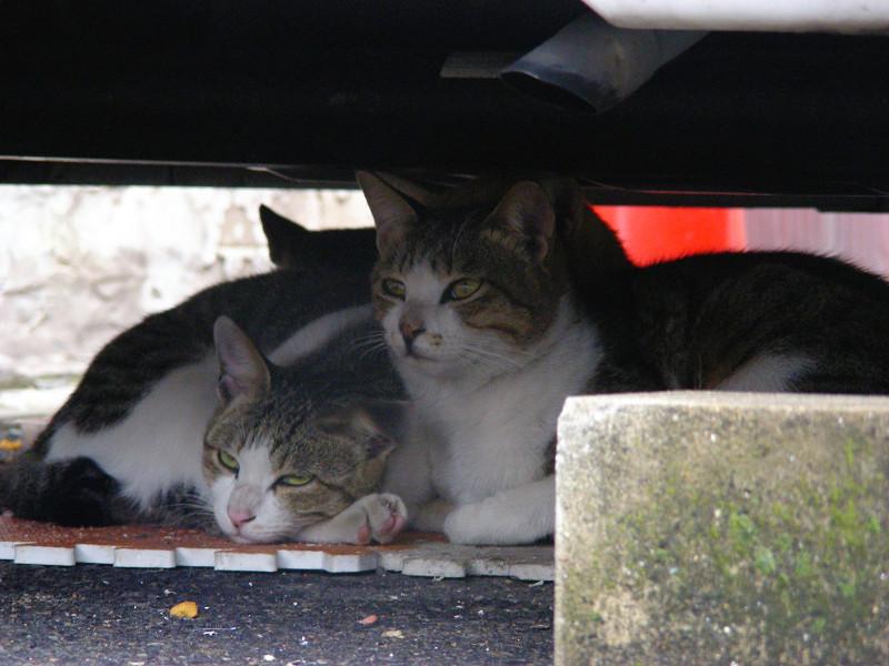 車の下で固まってる猫たち1