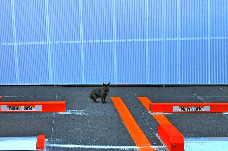 青白い壁と黒猫