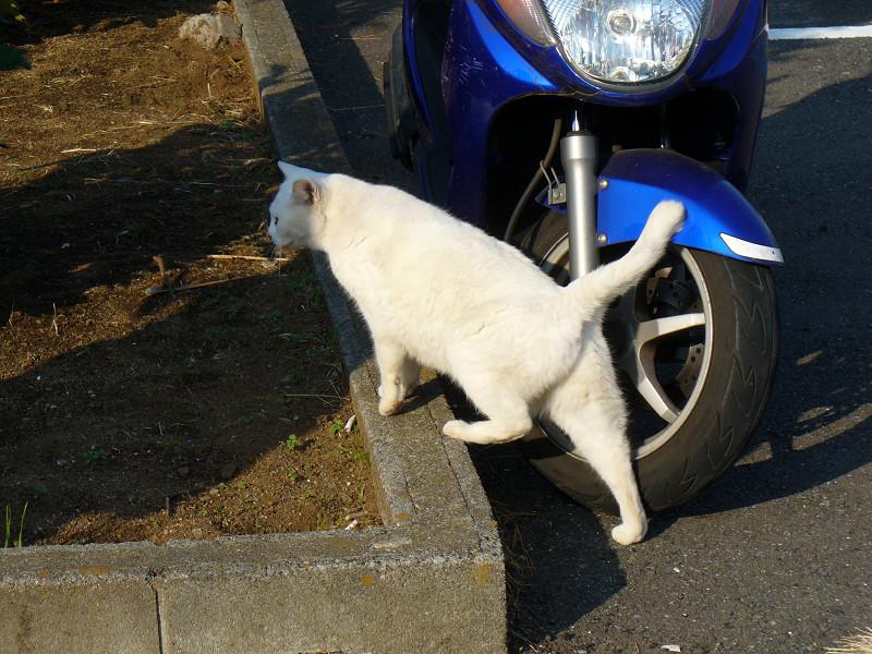 青いスクーターと白猫1