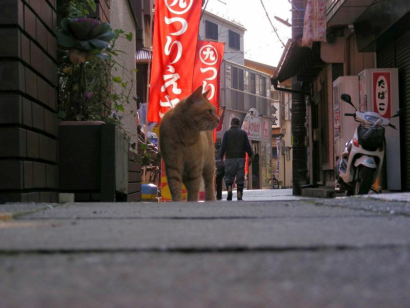 歩み寄って来る茶トラの猫2
