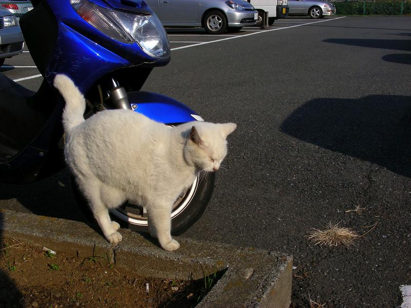 青いスクーターと白猫2