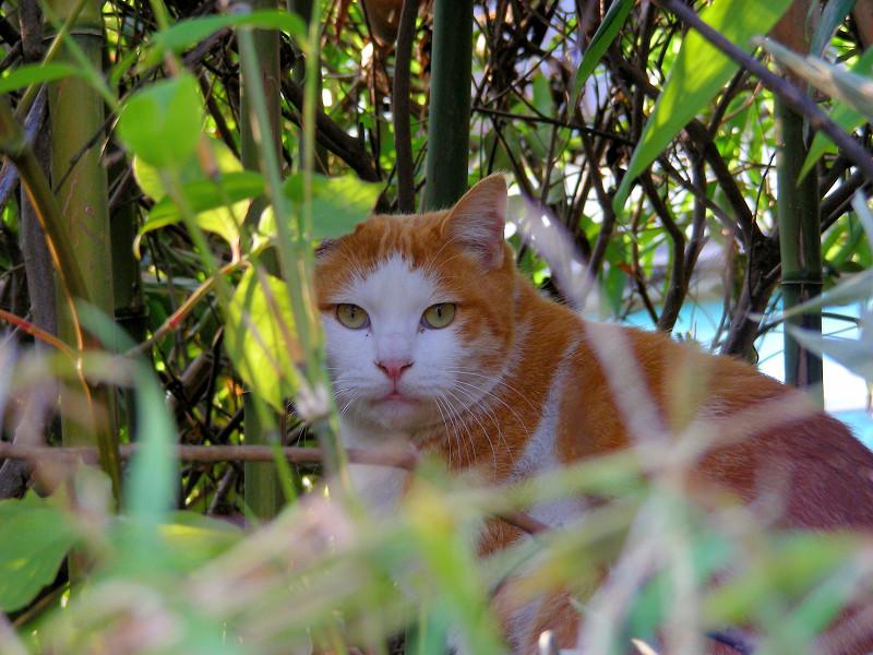 草むらと茶白猫2