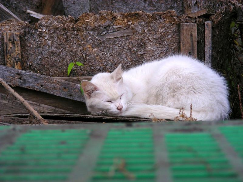 緑のパレットと白猫2