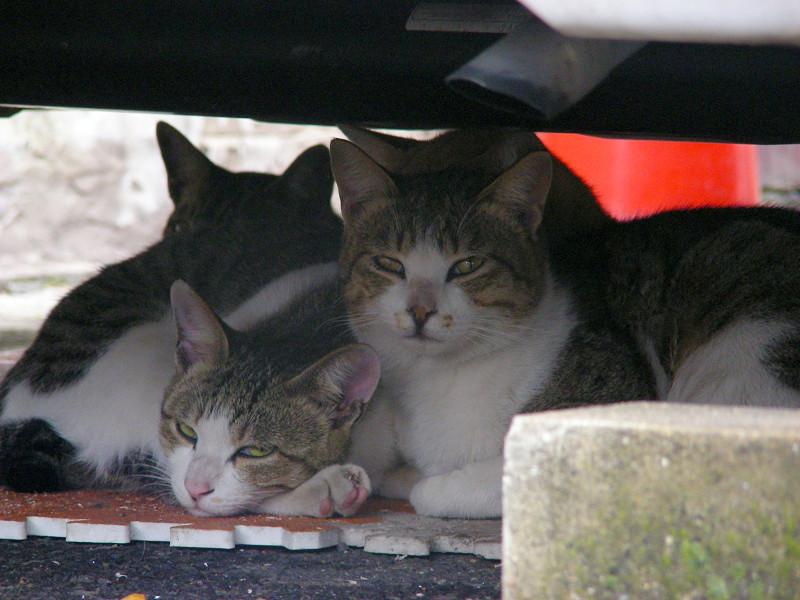 車の下で固まってる猫たち2
