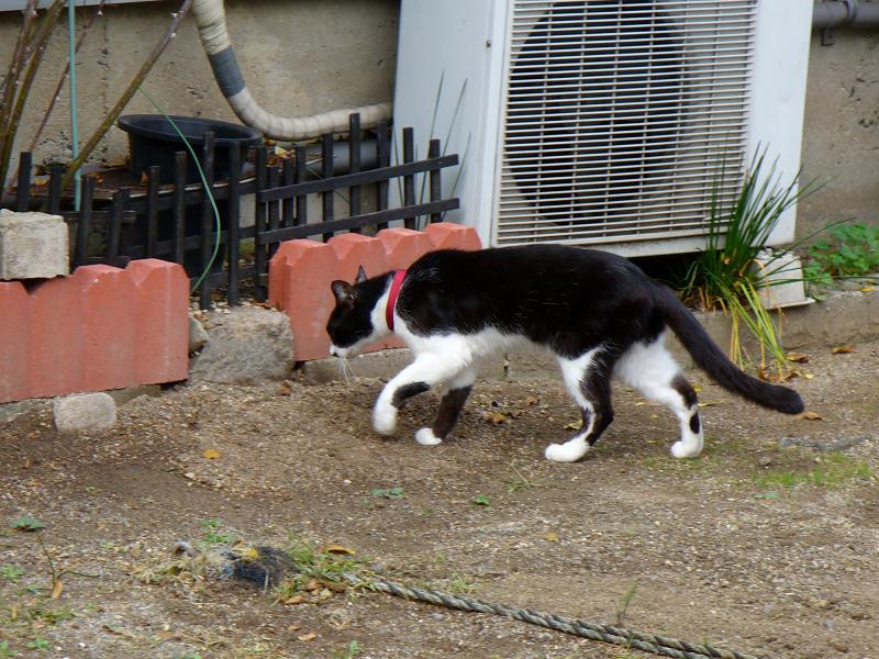 空き地の端っこに移動してる黒白猫2