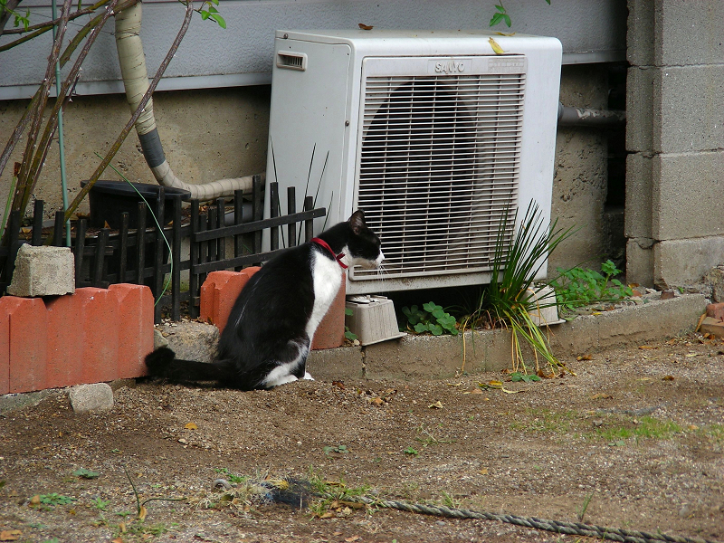 空き地の端っこに移動してる黒白猫3
